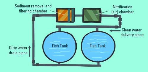 Sistemas de recirculación en acuicultura.