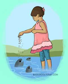 La acuicultura es una vieja práctica.